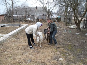 Learning to handle goats